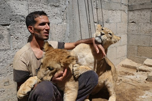 Nassim Abu Jamea, 29, poses for a picture with the two 9-month-old lion cubs at his home, in Khan Yunis